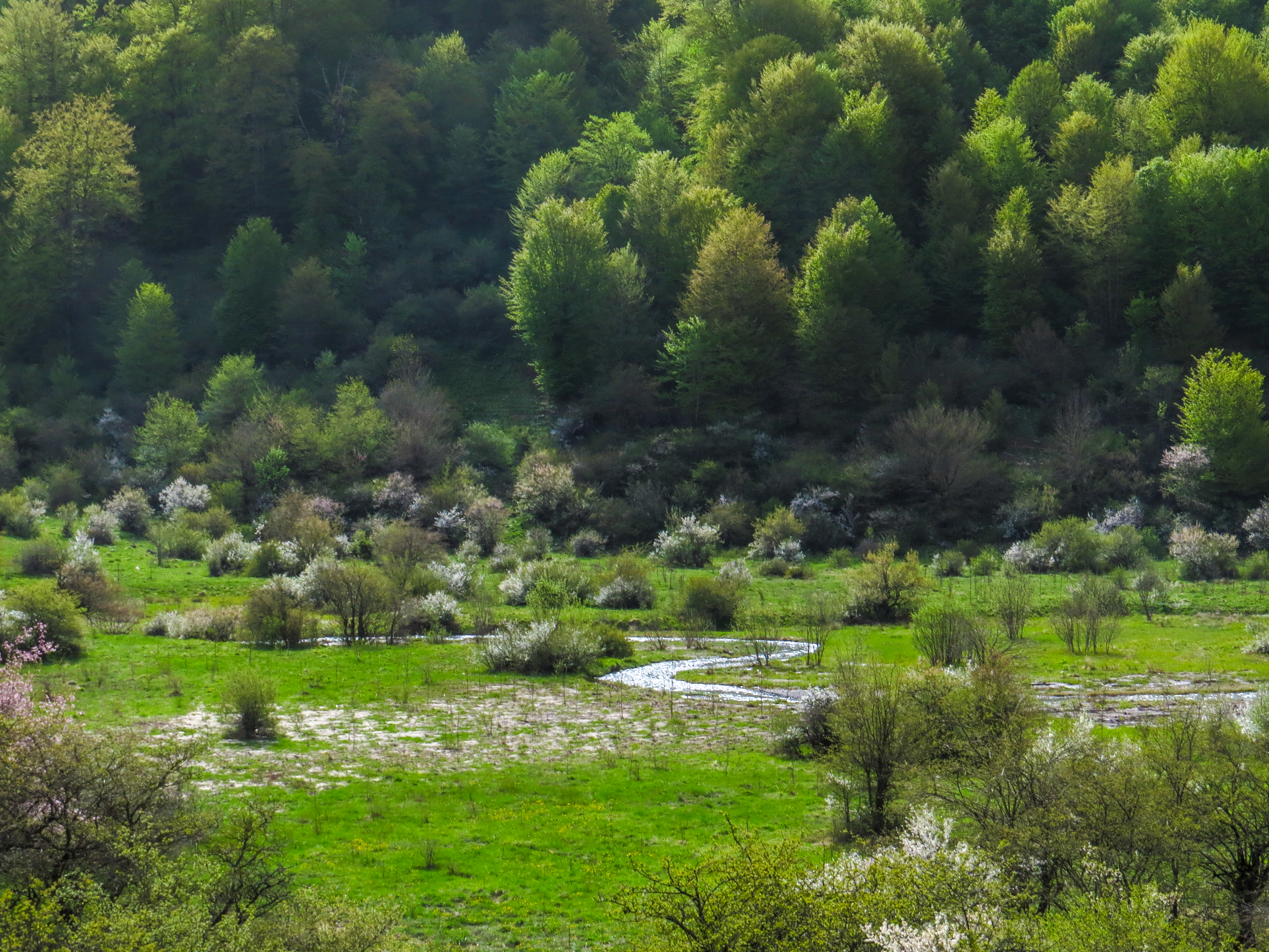 دریاسر سیالان