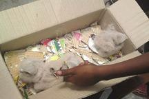 فروشنده حیوانات وحشی در شهرستان البرز دستگیر شد