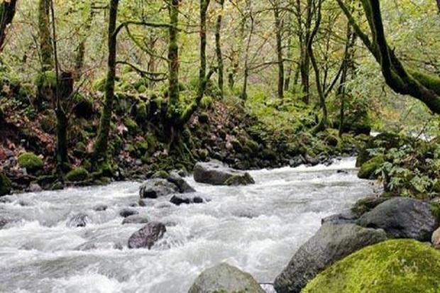 جست و جو برای یافتن بانوی گمشده در سیلاب آستارا آغاز شد