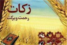 کشاورزان ایرانشهری 12 هزار تن گندم به عنوان زکات پرداخت کردند