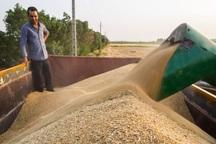 بیش از 4 میلیارد تومان به گندم کاران خراسان جنوبی پرداخت شد