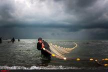 آغاز صید میگو در آبهای ساحلی استان بوشهر  پرهیز از صید در مناطق ممنوعه