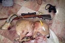 شمشیر قانون بالاسر شکارچیان غیرمجاز مازندران