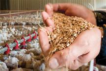 29 هزار تن خوراک طیور و مرغ زنده خراسان جنوبی به خارج کشور صادر شد