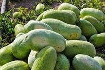 چهار هزار تن هندوانه از جاسک به عراق و ارمنستان صادر شد