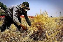 380 طرح توسعه اشتغال روستایی درالبرز ثبت شد
