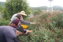 از برداشت نامناسبی که تغییر اقلیم را رقم میزند تا یارانهای برای حفظ گیاهان دارویی