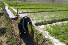 تغییر رویکر از کشاورزی سنتی به صنعتی اجتناب ناپذیر است