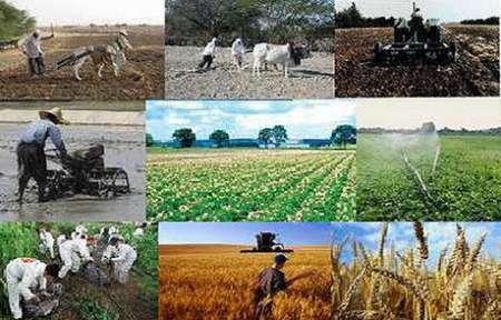 سرپرست فرمانداری گیلانغرب: سطح تولیدات کشاورزی و دامی این شهرستان به 134 هزار تن رسید