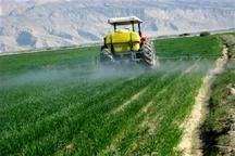 کردستان پیشرو در مبارزه با سن مضر غلات  اطمینان خاطر از تولید گندم سالم در استان