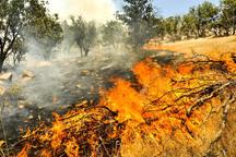آتش سوزی جنگل ها در مریوان مهار شد