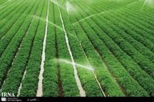 اراضی خرد مانع توسعه بخش کشاورزی است