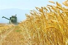 22 مرکز خرید تضمینی گندم در خراسان جنوبی تجهیز شد