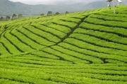 20 درصد زمین های کشاورزی آذربایجان غربی تحت پوشش بیمه است