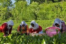 34 درصد اعتبار اشتغال روستایی  استان مرکزی جذب شد