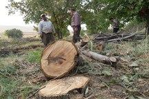 چوب حراج بر باغ های خراسان شمالی