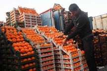 7000 تن پرتقال از جنوب کرمان به سایر نقاط کشور ارسال شد
