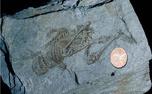 فسیل ۶۰۰ میلیون ساله شبیه به انسان در قطب شمال/ عکس