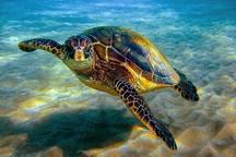 10 گونه آبزی خلیج فارس در معرض خطر انقراض است