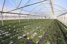 ۱۰۰ هکتار گلخانه در استان تهران ایجاد شد
