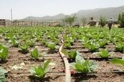 اجرای طرح آبیاری تحت فشار در 16 هزار هکتار از اراضی کشاورزی آذربایجانغربی