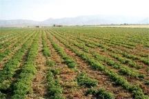 نیمی از تولیدات کشاورزی استان یزد کم آبخواه هستند  کشت گیاهان دارویی در چهار هزار هکتار از اراضی