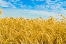امام جمعه میامی توجه بیشتر مسوولان به بیمه محصولات کشاورزی را خواستار شد