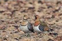 47 قطعه پرنده باقرقره زنده در روستای کرند گنبد کشف شد