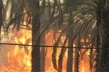 آتش سوزی نخلستان سیاهو بندرعباس در حال کنترل است