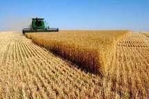 مدیر جهاد کشاورزی چایپاره: محدودیت منابع آب لزوم کشت کلزا را افزایش می دهد