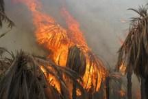 سرپرست شهرداری: آتش سوزی در نخلستان های گشت سراوان مهار شد