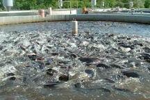 بزرگترین سایت پرورش ماهی سردآبی کشور در اندیمشک احداث می شود
