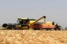 قیمت خرید تضمینی گندم به تناسب افزایش قیمت نهادهها افزایش یابد  گران شدن نهاده های کشاورزی مشکل کشاورزان