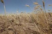 زراعت در مناطق شمالی گلستان جواب نمی دهد