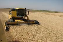 2 مرکز خرید تضمینی گندم در گیلان فعال است