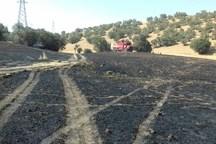 33 هکتار از مزارع خرم آباد و سلسله دچار آتش سوزی شد