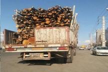 فرمانده یگان حفاظت منابع طبیعی اردبیل: قاچاق چوب تحت کنترل است
