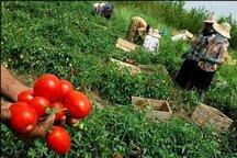 سقف اعتبارات بیمه بخش کشاورزی افزایش یافت