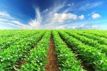 تولید کشاورزی پس از انقلاب در ابرکوه حدود 10 برابر شد