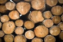 شش تن چوب قاچاق در خوشاب کشف شد