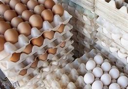 پیش بینی تولید ۹ هزار تن تخم مرغ در استان اردبیل در سال جاری