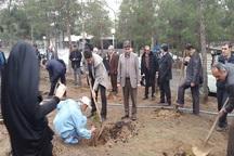 طرح کاشت 100 هزار اصله نهال رایگان میوه در جنوب تهران آغاز شد
