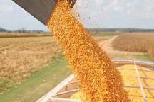 خرید توافقی 6200 تن محصولات کشاورزی و دامی در گیلان