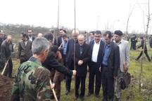 25هزار اصله نهال در لاهیجان توزیع می شود