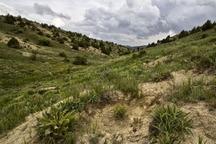 سند تک برگی 6000 هکتار اراضی استان مرکزی صادر شد