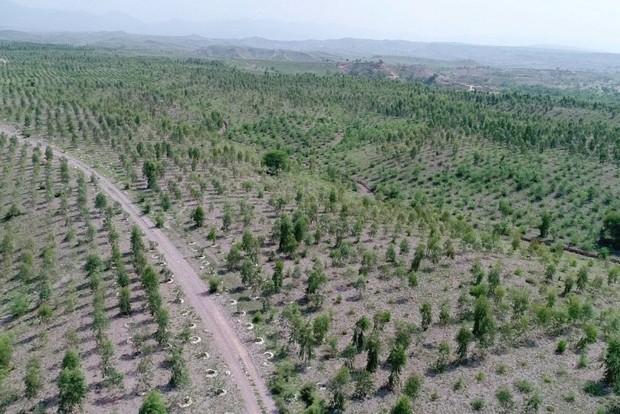 450 هکتار به فضای سبز و جنگلی تهران افزوده می شود