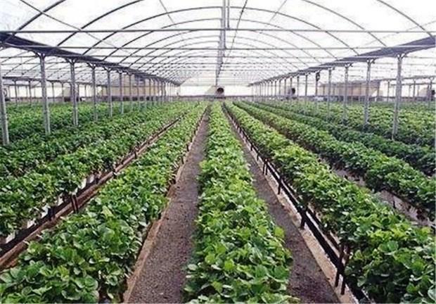 40 طرح کشاورزی چهارمحال و بختیاری آماده بهره برداری شد