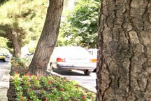 تعداد درختان ارومیه بیشتر از جمعیت شهری است