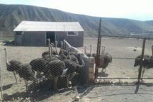 کار آفرینی روستایی، گامی به سوی اشتغال پایدار در طارم