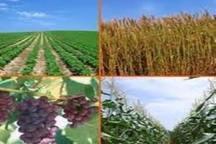 افزایش 16 درصدی تولیدات کشاورزی در دولت تدبیر و امید در آذربایجان غربی